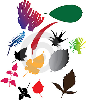 Set Icons - 103C. Leaves Stock Photo - Image: 8669300