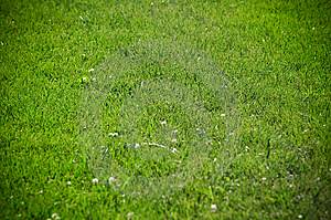 Grass Field Stock Photo - Image: 8669810