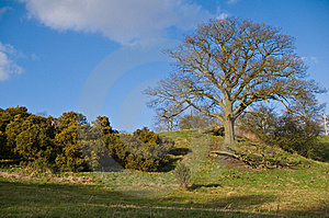 English Countryside - A Oak Tree On Small Hill Royalty Free Stock Photos - Image: 8671198