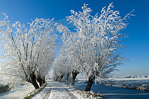 Frozen Lane Royalty Free Stock Images - Image: 8679229