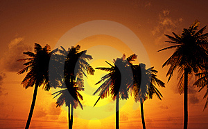 Beautiful Sunset Royalty Free Stock Photos - Image: 8692288