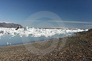 Icebergs Beach Royalty Free Stock Image - Image: 8693256