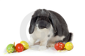 Easter Rabbit Stock Photos - Image: 8694893