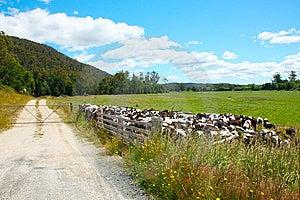 Farm Royalty Free Stock Photo - Image: 8695315