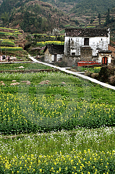 Cole Flowers And White Farm Houses Royalty Free Stock Photo - Image: 8697295