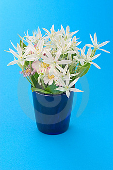 Spring Flowers In Mug Stock Photography - Image: 872922