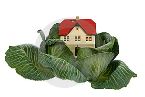 House In Cabbage On White Royalty Free Stock Photography - Image: 8703647