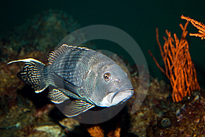 Fish In Aquarium Royalty Free Stock Image - Image: 8708236