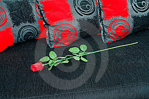 Rose At Sofa Stock Photography - Image: 8708972