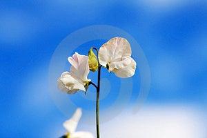 Celebrating Spring With Beautiful Garden Flowers Stock Image - Image: 8714311