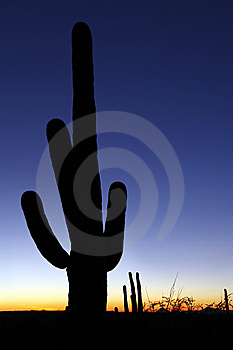Clear Sky Saguaro Sunset Vertical Royalty Free Stock Image - Image: 8714456