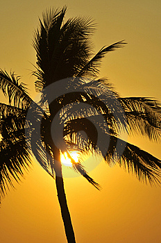 Palm Tree Sunset Royalty Free Stock Images - Image: 8728829