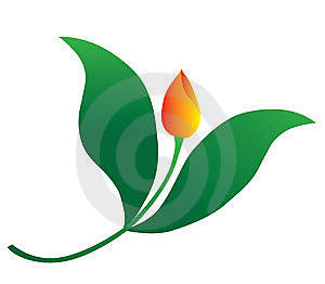 Tulip Fly Royalty Free Stock Photos - Image: 8732658
