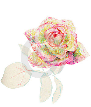 Rose Royalty Free Stock Images - Image: 8733829