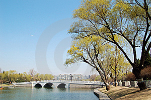 Willows Beside Bridge Stock Photography - Image: 8736232