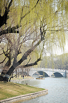 Willows Beside Bridge Stock Photo - Image: 8736550