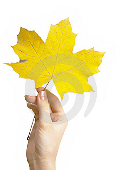 Maple Leaf In A Hand Stock Images - Image: 8739324