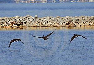 Flying Trio Royalty Free Stock Images - Image: 8743509