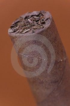 Havana Cigar Stock Photo - Image: 8747360