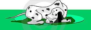 Dalmatian Dog Royalty Free Stock Photography - Image: 8750617