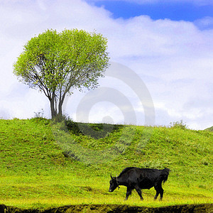 Green Landscape With Isolated Cattle Royalty Free Stock Photos - Image: 8751868