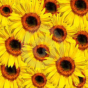 Sunflower Abstract Stock Images - Image: 8758164
