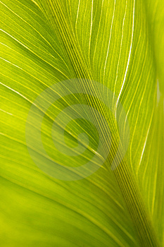 Green Leaf Closeup Texture Stock Images - Image: 8758634
