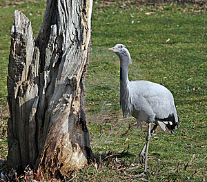 Crane Animal Bird Stock Images - Image: 8759214