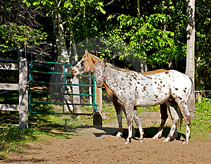 Farm Horses Royalty Free Stock Image - Image: 8761046