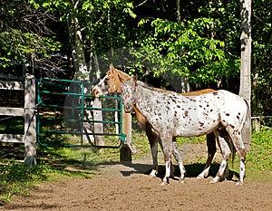 Landbouwbedrijfpaarden Royalty-vrije Stock Afbeelding - Afbeelding: 8761046