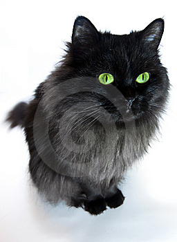 Black Cat With Green Eyes Stock Image - Image: 8762321