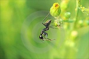 Ants Stock Photo - Image: 8766200