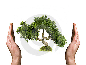 Tree in human hands Free Stock Photography