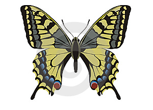 Makhaon Butterfly Papilio Machaon Stock Photo - Image: 8789750