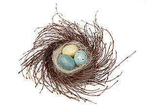 Bird's Nest With Eggs Stock Photos - Image: 8791043