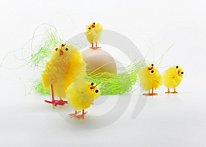 Easter Chickens Stock Photo - Image: 8791360