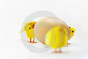 Easter Chickens Stock Image - Image: 8791631