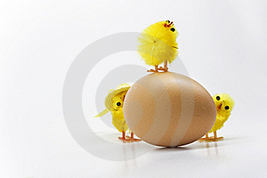 Easter Chickens Royalty Free Stock Photos - Image: 8791688