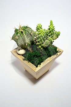 Succulent Couple Royalty Free Stock Photos - Image: 8791908