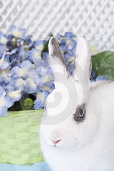 White Rabbit With Green Basket And Flowers Royalty Free Stock Image - Image: 8794086