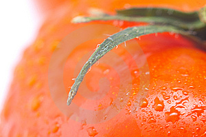 Red Fresh Tomato Stock Image - Image: 8801061