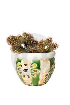 Uitsteeksel-cactus Royalty-vrije Stock Foto - Beeld: 8801595