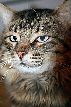 Unusual Cat Stock Photo - Image: 8801820