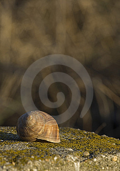 Shell In The Sunset Stock Image - Image: 8803451