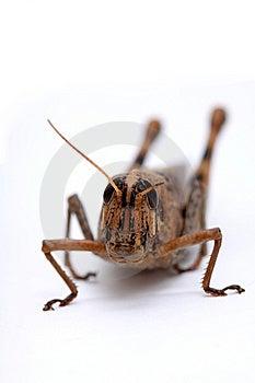 Grasshopper Stock Image - Image: 8806411