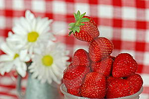 Berry Bright Stock Images - Image: 8807524