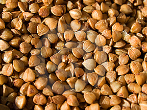 Buckwheat Stock Images - Image: 8814744