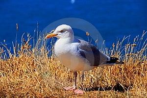 Fauna Und Normannische Flora Stockfotografie - Bild: 8815792