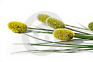 Willows On White Stock Photos - Image: 8818503