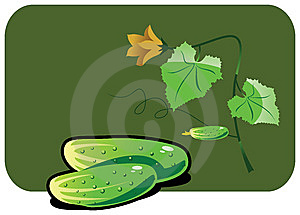 Cucumber Royalty Free Stock Photo - Image: 8819185